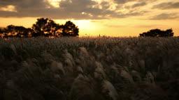 상암동 하늘공원의 갈대밭 일몰풍경