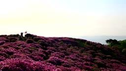 황매산 철쭉 핀 풍경