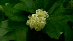 꽃 개화하는 모습