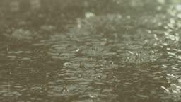 빗물 떨어지는 모습