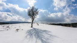 제주 서귀포시 중산간도로 겨울 나무 풍경