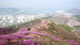 전라남도 여수 영취산 진달래의 모습