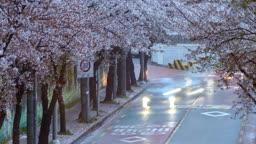 부산 영도구 중리로 벚꽃길 야경