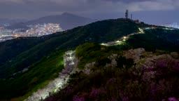 벚꽃과 진달래가 어우러진 부산 황령산의 야경과 일출