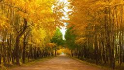 가을 가로수 길