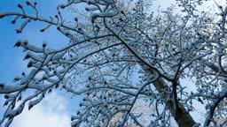 나뭇가지 위에 쌓인 눈