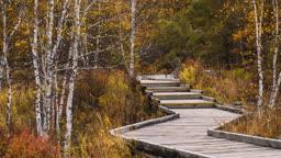 중국 숲 안 나무 계단