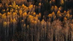 중국 아얼산 숲
