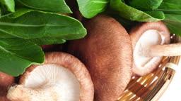 버섯과 청경채