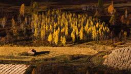 중국 가을 들판