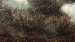 중국 안개로 뒤덮인 아얼산 숲