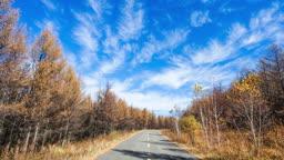 중국 몽골 내륙 지방 숲 속 사이 도로