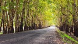 숲 속 길