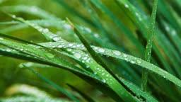 잔디 위 물방울들
