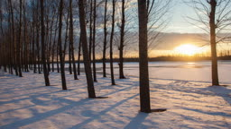 눈 덮인 숲과 일몰