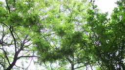 아래서 바라본 나무 풍경