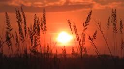 nature in beams of leaving sun.