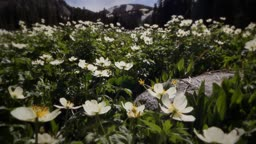 (1203) Colorado Rocky Mountains Alpine Wildflowers Summer Tourism Lake LOOP