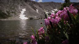 (1209) Colorado Rocky Mountains Alpine Wildflowers Summer Tourism Lake Outdoors Nature