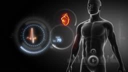 Human heart x-ray scan