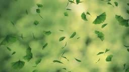 Falling gingko foliage