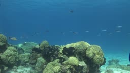 Anemonen, Korallen und Fische im Meer