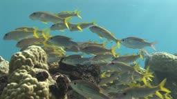 Korallen und Fische im Meer