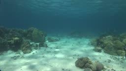 Unterwasseraufnahmen vom Meeresgrund