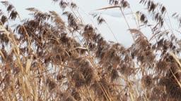 dry grass, winter