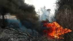 Fire on the roadside, burning trees and a car tire