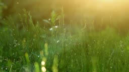 Blurred grass background with water drops.