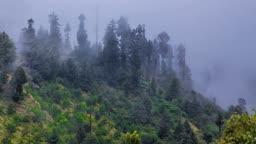 Fog in forest timelapse