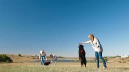 People with Newfoundland dogs playing on the nature
