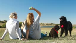 People with Newfoundland dogs enjoying a sunny day on the nature