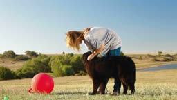 Young Woman Training Newfoundland Dog Outdoor