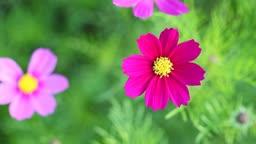 macro flowers.