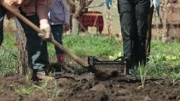 Family Planting Potatoes on Smallholder Farm