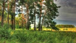Forest Timelaps With Spectacular Natural Light Effect. HDR Timelapse Shot Motorized Slider