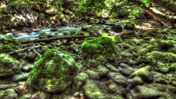 Moss On The Rocks Forest Stream. HDR Time Lapse Shot Motorized Slider