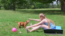 Little girl with american staffordshire terrier puppy dog having fun on grass in summer park