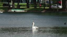 View of the lake with its swans and cars driving.Located on Rosalind Avenue in Orlando, Florida, the Lake Eola Park is a popular meeting place. The picturesque recreational area is famous for the Linton E. Allen Memorial Fountain.