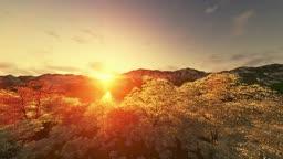 Spring scenery sunset