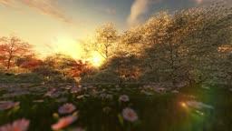 Spring scenery at sunrise