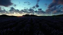 Lavender field against beautiful timelapse sunrise