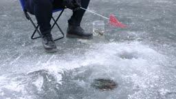 강원도 홍천군 겨울 저수지 빙어 기다리는 낚싯대와 잡힌 빙어들
