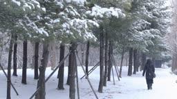 경기도 동두천 함박눈과 눈이 쌓인 소나무 사이를 걷는 사람