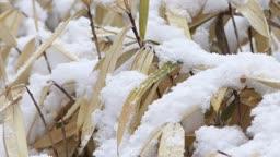 경기도 동두천 잎에 눈이 쌓이고 있는 겨울 풍경