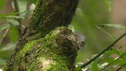 충북 원주 소태면 둥지 찾는 동고비