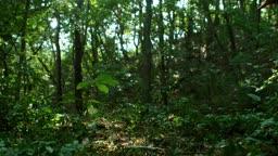 충북 원주 소태면 사냥하는 호반새