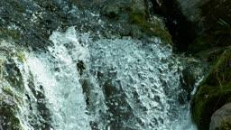 전남 순천 송광사 폭포 위로 비행하는 물까마귀